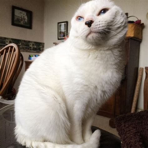 Woman Takes a Chance on Earless Senior Cat While Others