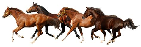 Transparent Background Png Horse #22562 - Free Icons and