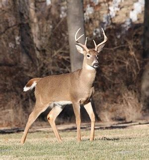 IDNR Sets Health and Safety Procedures for Deer Hunting at