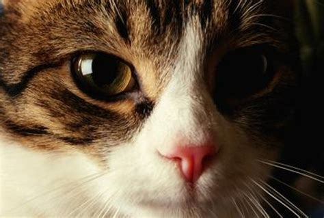 What Color Are Most Cat Noses? - Pets