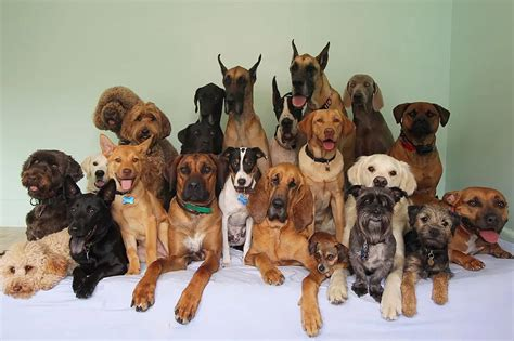 13 Epic Group 'Selfies' And Squad Photos From Doggie Daycares
